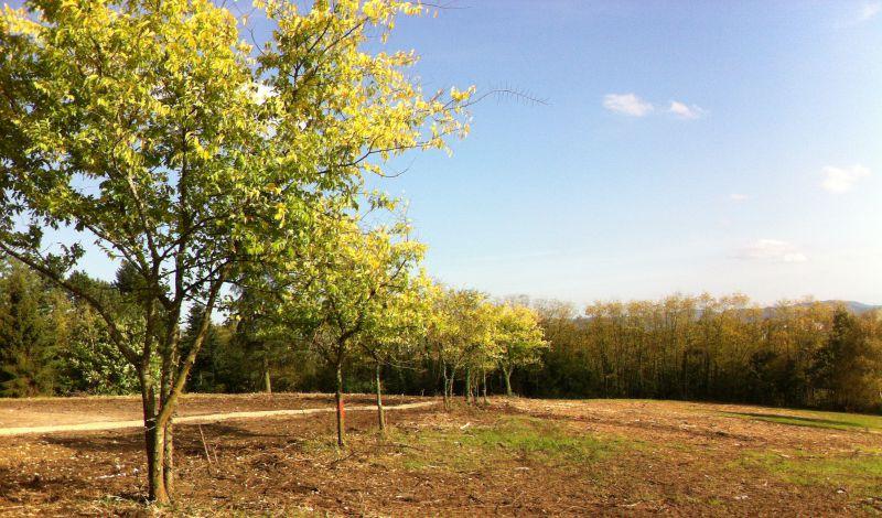 Lotissement – Les Monts du Réveil à Pont-de-Chéruy (38230)